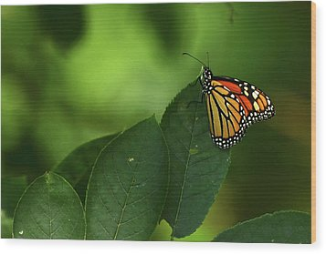 Wood Print featuring the photograph Monarch On Leaf by Ann Bridges