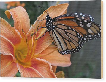 Monarch On Lily Wood Print by Carol Sweetwood