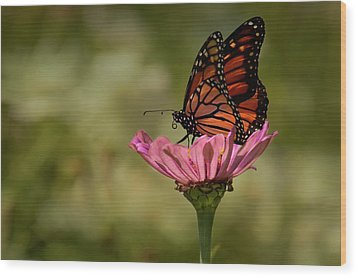 Wood Print featuring the photograph Monarch On Pink Zinnia by Ann Bridges