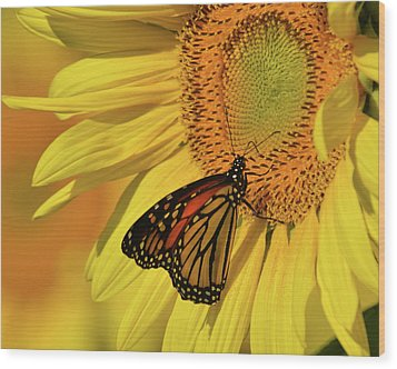 Wood Print featuring the photograph Monarch On Sunflower by Ann Bridges