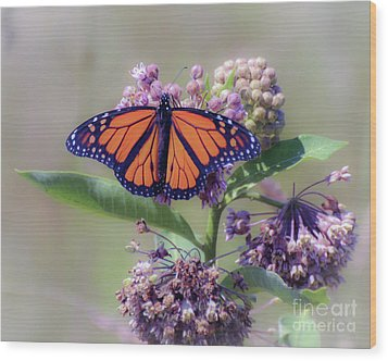 Wood Print featuring the photograph Monarch On The Milkweed by Kerri Farley