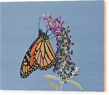 Wood Print featuring the photograph Monarch Orange And Blue by Lara Ellis