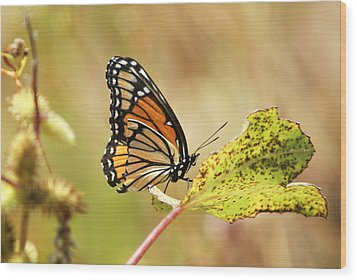 Wood Print featuring the photograph Monarch by Rick Friedle