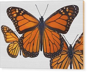 Monarchs Wood Print