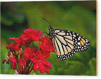 Monarh Butterfly Wood Print