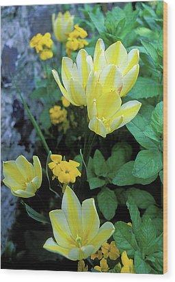 Monet's Fancy Tulips Wood Print by Kathy Yates