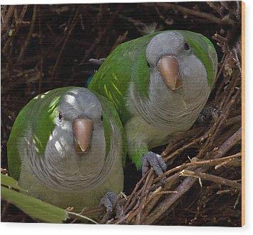 Monk Parakeet Pair Wood Print