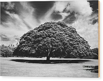 Monkey Pod Tree In Black And White Wood Print by Charmian Vistaunet