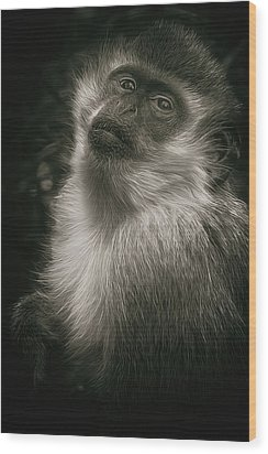 Monkey Portrait Wood Print