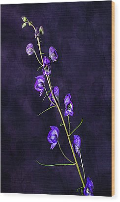Monkshood Version 2 Wood Print