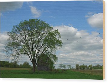 Wood Print featuring the photograph Monmouth Battlefield by Steven Richman