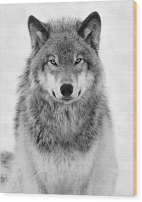 Monotone Timber Wolf  Wood Print by Tony Beck