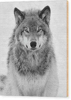 Monotone Timber Wolf  Wood Print