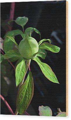 Monstrous Plant Bud Wood Print by Douglas Barnett