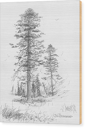 Montana-ponderosa Pine Wood Print