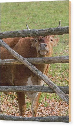 Wood Print featuring the photograph Moo by Bill Wakeley