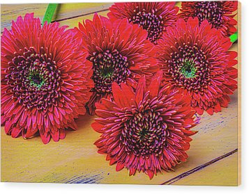Moody Red Gerbera Dasies Wood Print by Garry Gay