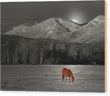 Moon Of The Wild Horse Wood Print