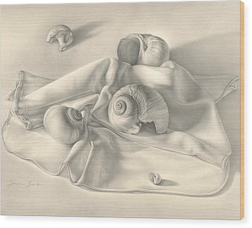 Wood Print featuring the drawing Moon Snail Still Life by Donna Basile