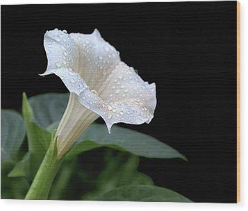 Moonflower - Rain Drops Wood Print