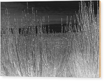 Moonlight On The Marsh Wood Print by Irma BACKELANT GALLERIES