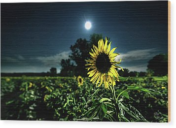 Wood Print featuring the photograph Moonlighting Sunflower by Everet Regal
