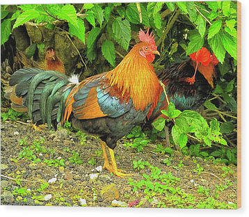 Wood Print featuring the photograph Moorea Chicken by Bill Barber