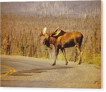 Wood Print featuring the photograph Moose Crossing by Adam Owen