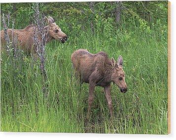 Moose In The Field Wood Print