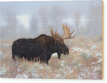Wood Print featuring the photograph Moose In The Fog Silhouette by Adam Jewell