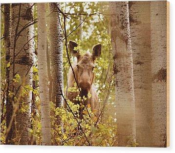 Wood Print featuring the photograph Moose Peek-a-boo by Adam Owen