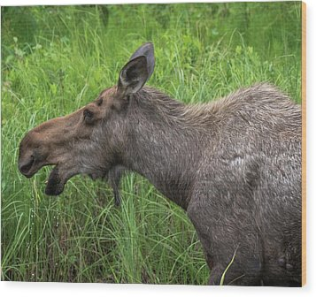 Moose Profile Wood Print