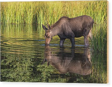 Wood Print featuring the photograph Moose Reflections by Mary Hone