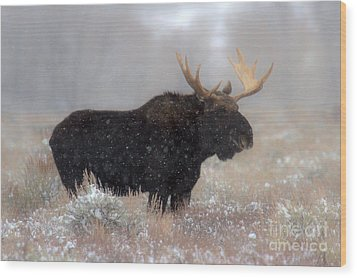 Wood Print featuring the photograph Moose Winter Silhouette by Adam Jewell