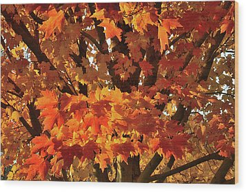Wood Print featuring the photograph Moraine Hills Sugar Maple by Ray Mathis