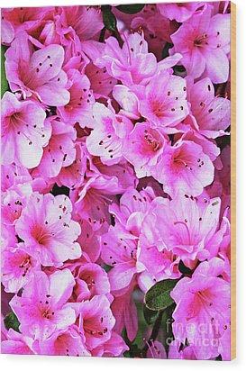 More Pink Azaleas Wood Print