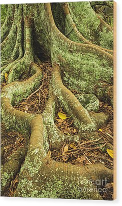 Wood Print featuring the photograph Moreton Bay Fig by Werner Padarin