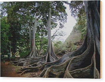 Moreton Bay Figs Wood Print by Michael Palmer