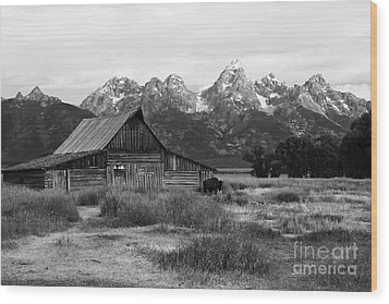 Mormon Row Famous Barn Wood Print by Teresa Zieba