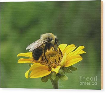 Morning Bee Wood Print