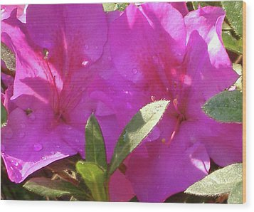 Wood Print featuring the photograph Morning Dew by Diane Ferguson