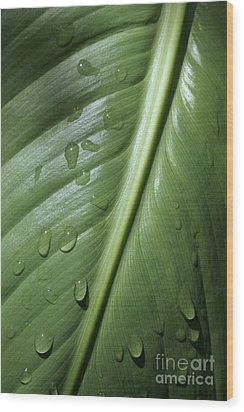 Morning Dew Wood Print by Jeannie Burleson