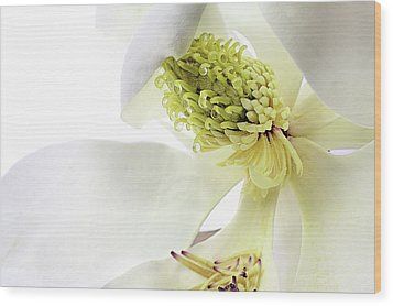 Wood Print featuring the photograph Morning Dew Magnolia by JC Findley