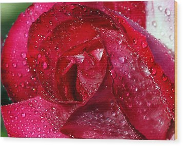 Morning Dew On Rose Wood Print