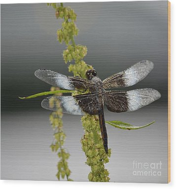Wood Print featuring the photograph Morning Dew by Randy Bodkins