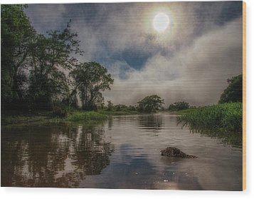 Wood Print featuring the photograph Morning Dip by Wade Aiken