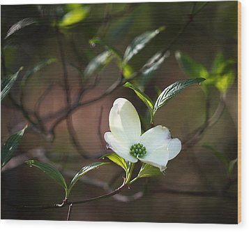 Morning Dogwood At Buffalo River Trail Wood Print by Michael Dougherty