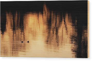 Wood Print featuring the photograph Morning Ducks 2017 by Bill Wakeley