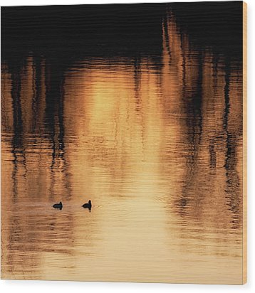 Wood Print featuring the photograph Morning Ducks 2017 Square by Bill Wakeley