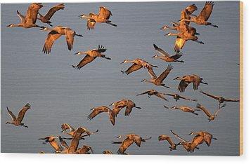 Morning Flight Wood Print